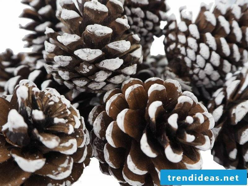 Paint with pine cones white