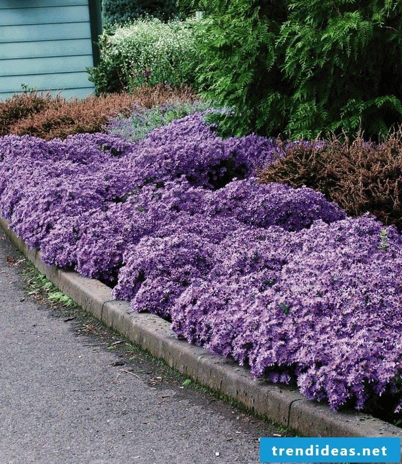 delicate purple blooming upholstery