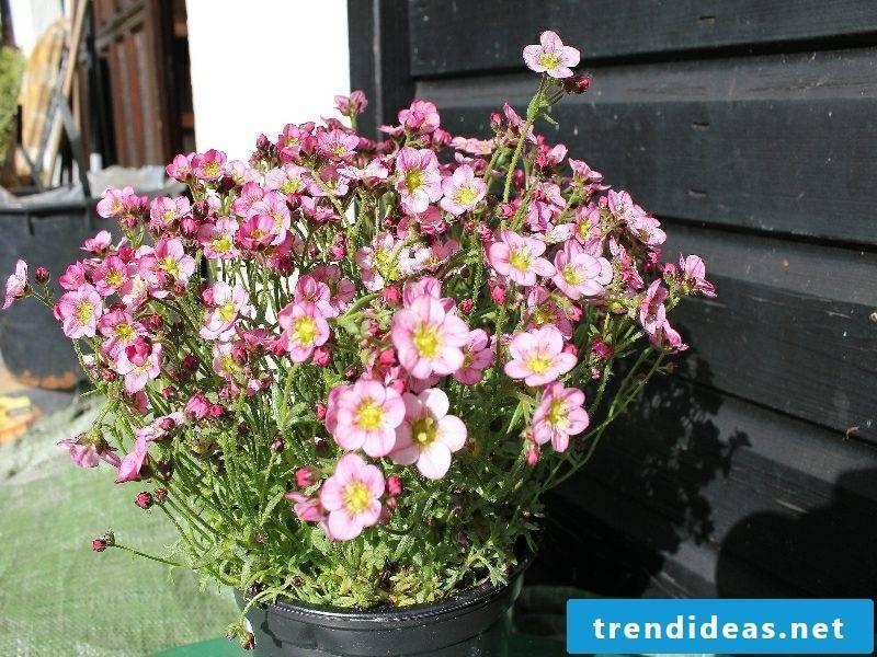 Flowerpot upholstery