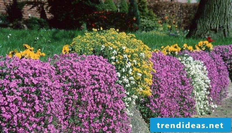 Upholstered perennials in the garden Ideas and inspirations