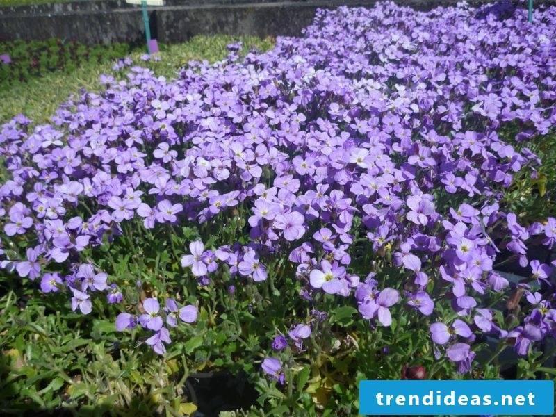 purple flowered upholstery