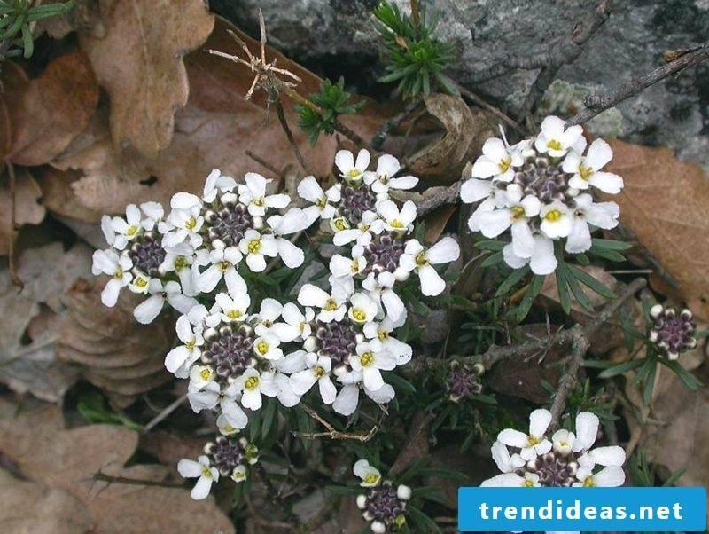 delicate white flowered ribbon flower