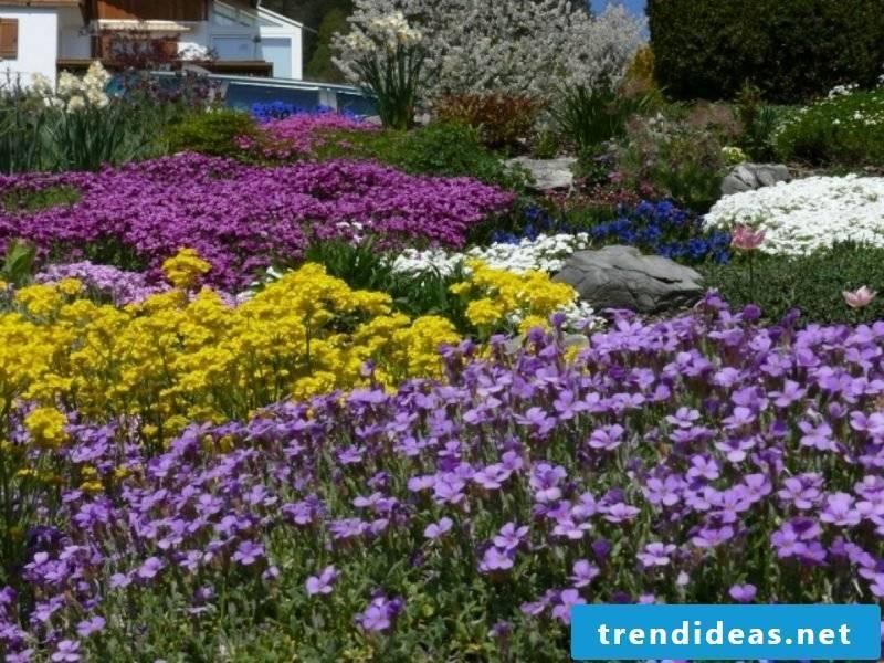 Upholstered perennials in the garden
