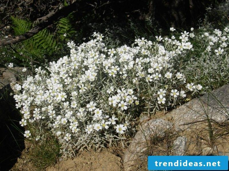 Garden design Ideas and inspirations Upholstery hornwort