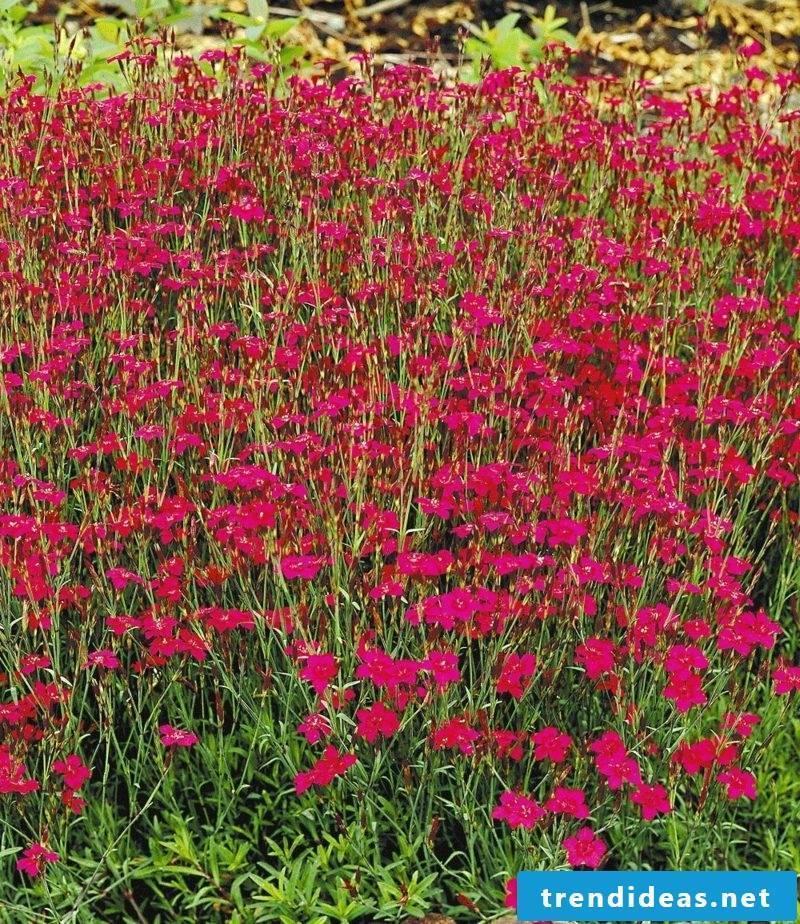 easy-care garden plants upholstered perennials