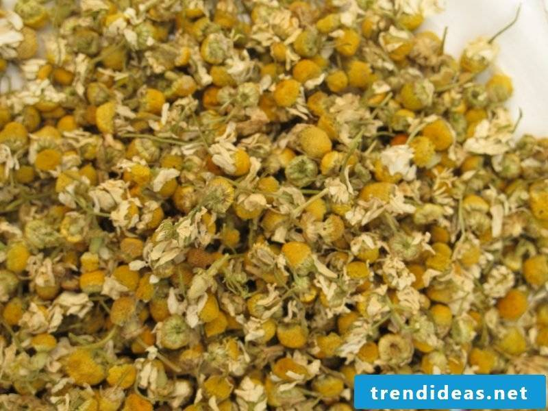 flowers chamomile spring flowers pictures